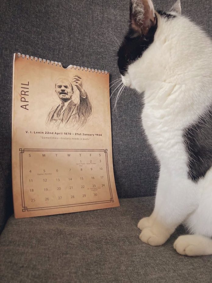 A very cute black and white cat looks at a calendar that is open on a picture of Lenin